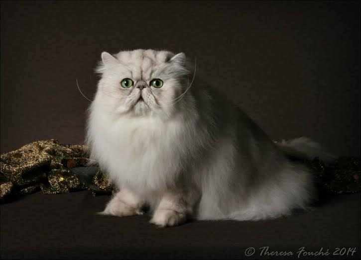 2014 CAT OF THE YEAR