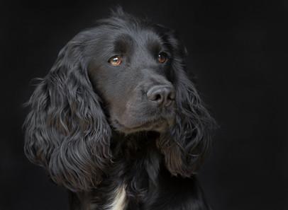 FTAW Donnachaidh Black Opal (Cole)