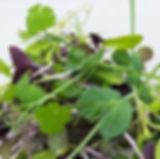 Sunny Salad Mix.jpg