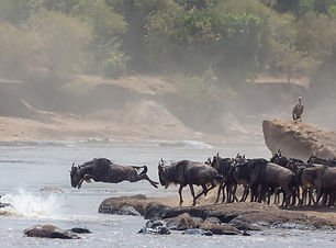 It is the Great Wildebeest Migration.  T