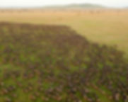 Wildebeest_Migration_in_Serengeti_Nation
