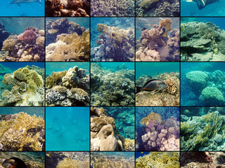 25 shades of Red   (Sea)