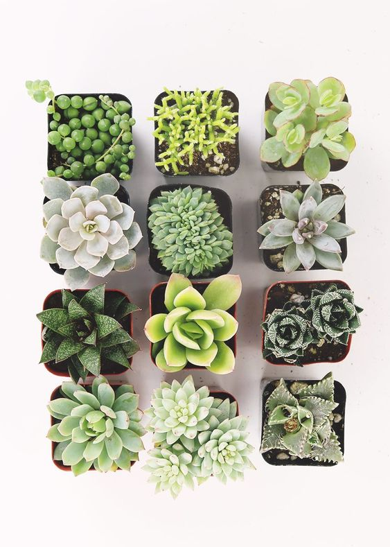 Succulent Plants, easy to propagate and look great in a living wall