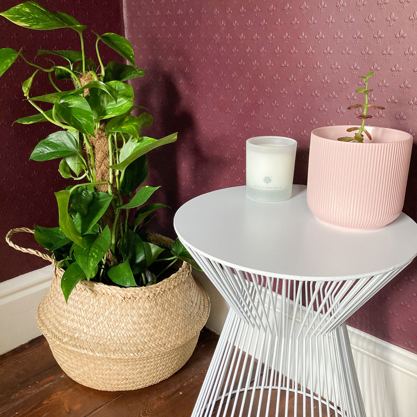 Purple bedroom with plant in wicker basket, white metal bedside table, and succulent in pink pot