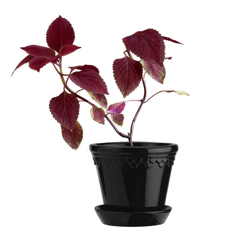 Glazed Plant Pot & Saucer