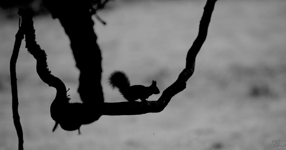 écureuil - branche.JPG
