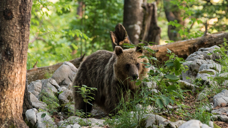 Medved-33.jpg