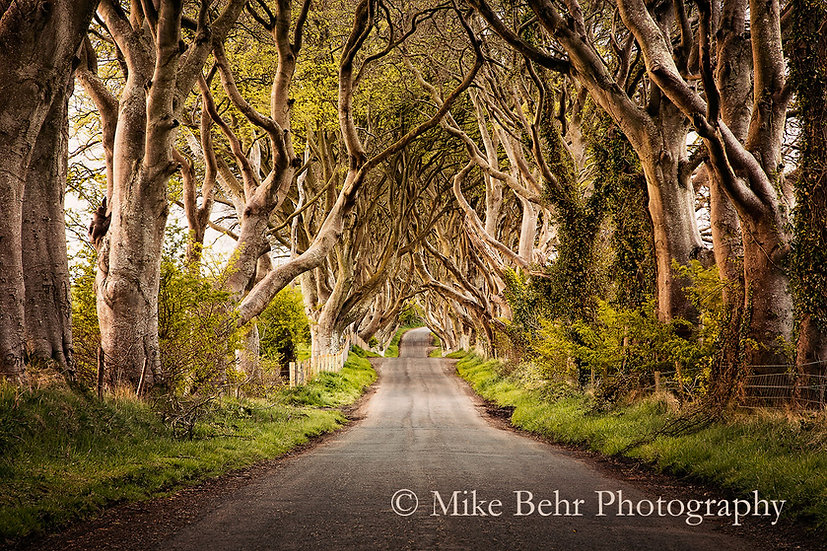 Irish Canopy