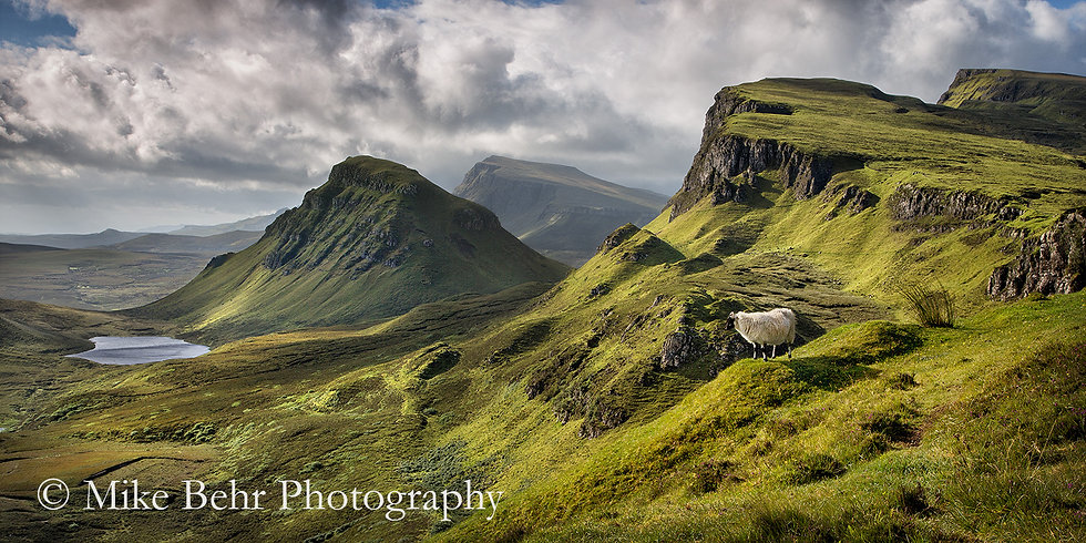 Sheep of the Quiraing