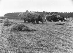 b-Strohernte-Juli-1938