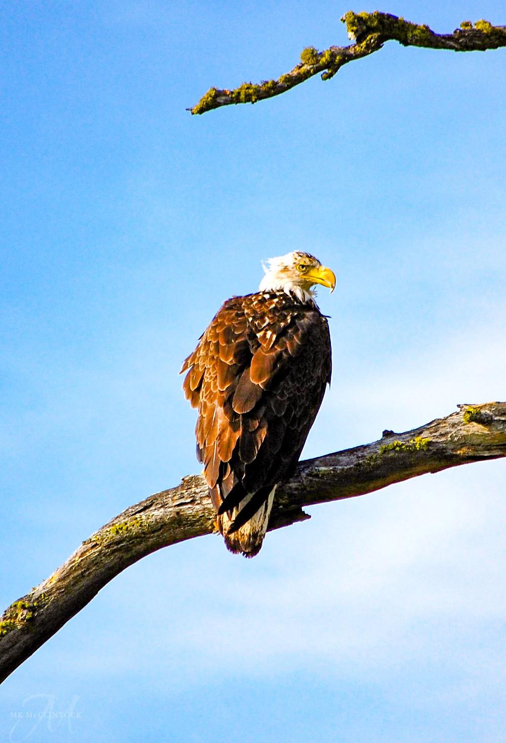 Eagle_MK McClintock