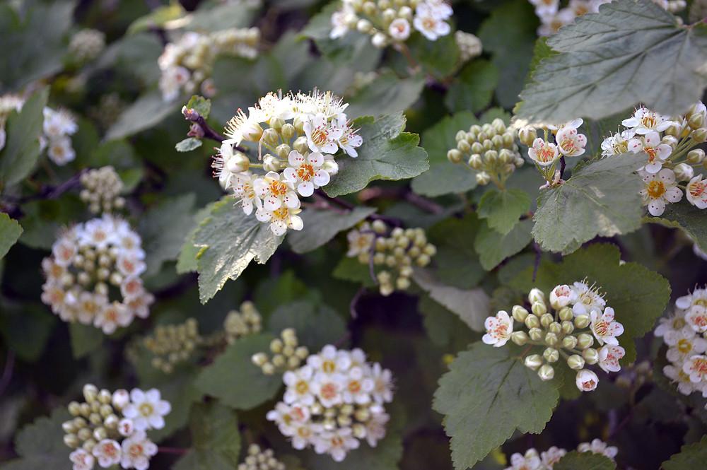 MKMcClintock.com - #woods #flowers #nature #walking