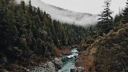 forest-1246219.jpg