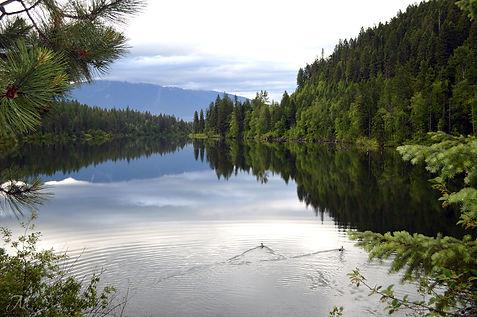 River Road Walk_June Ducks_MK McClintock