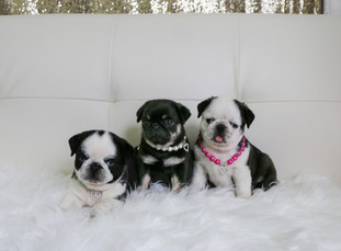 Bundles of Love Puppies_2.jpg