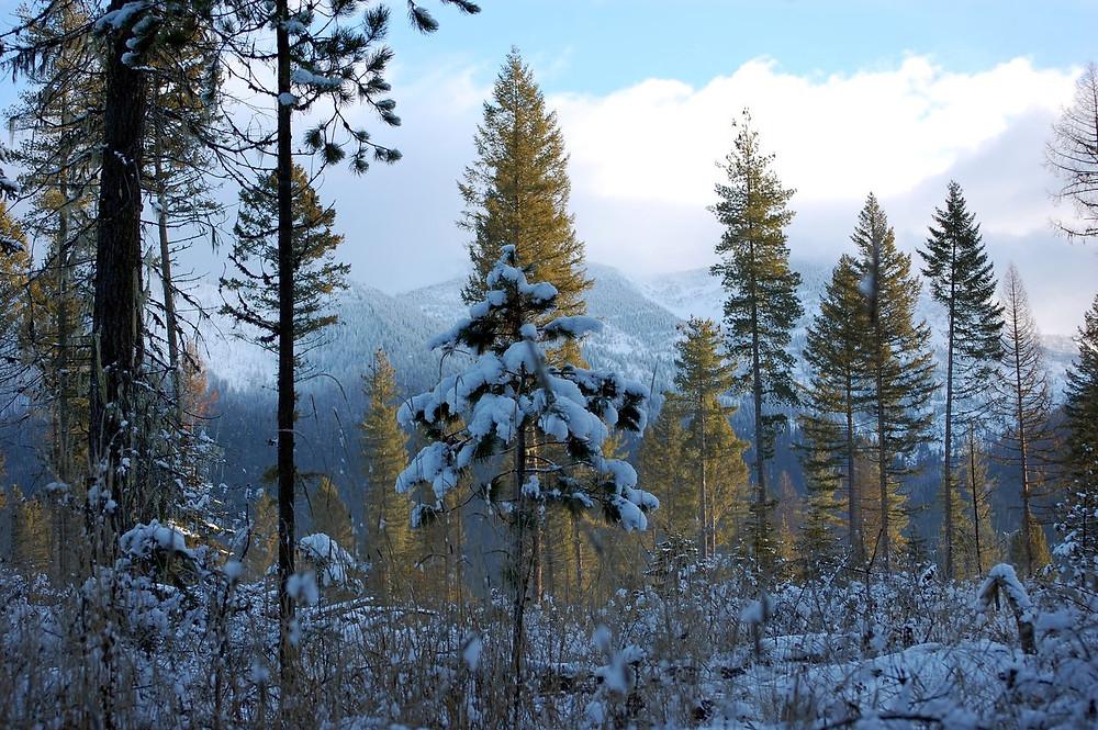 Jewel Basin Winter by MK McClintock