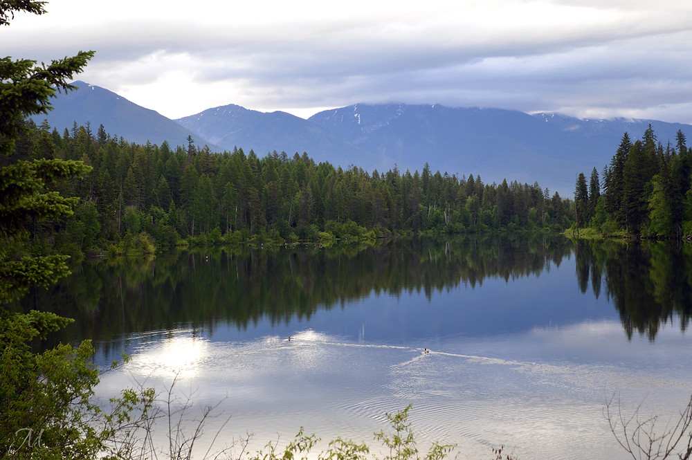 River Road Reflections_©MK McClintock #river #Montana #scenery #landscape #ducks
