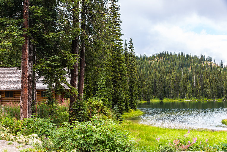 Log Cabin In Pine Forest By Lake.jpg