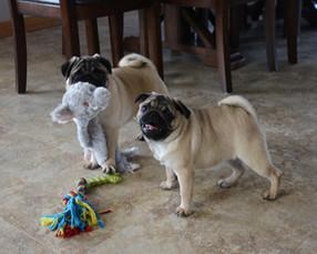 Bundles of Love Puppies_3.jpg