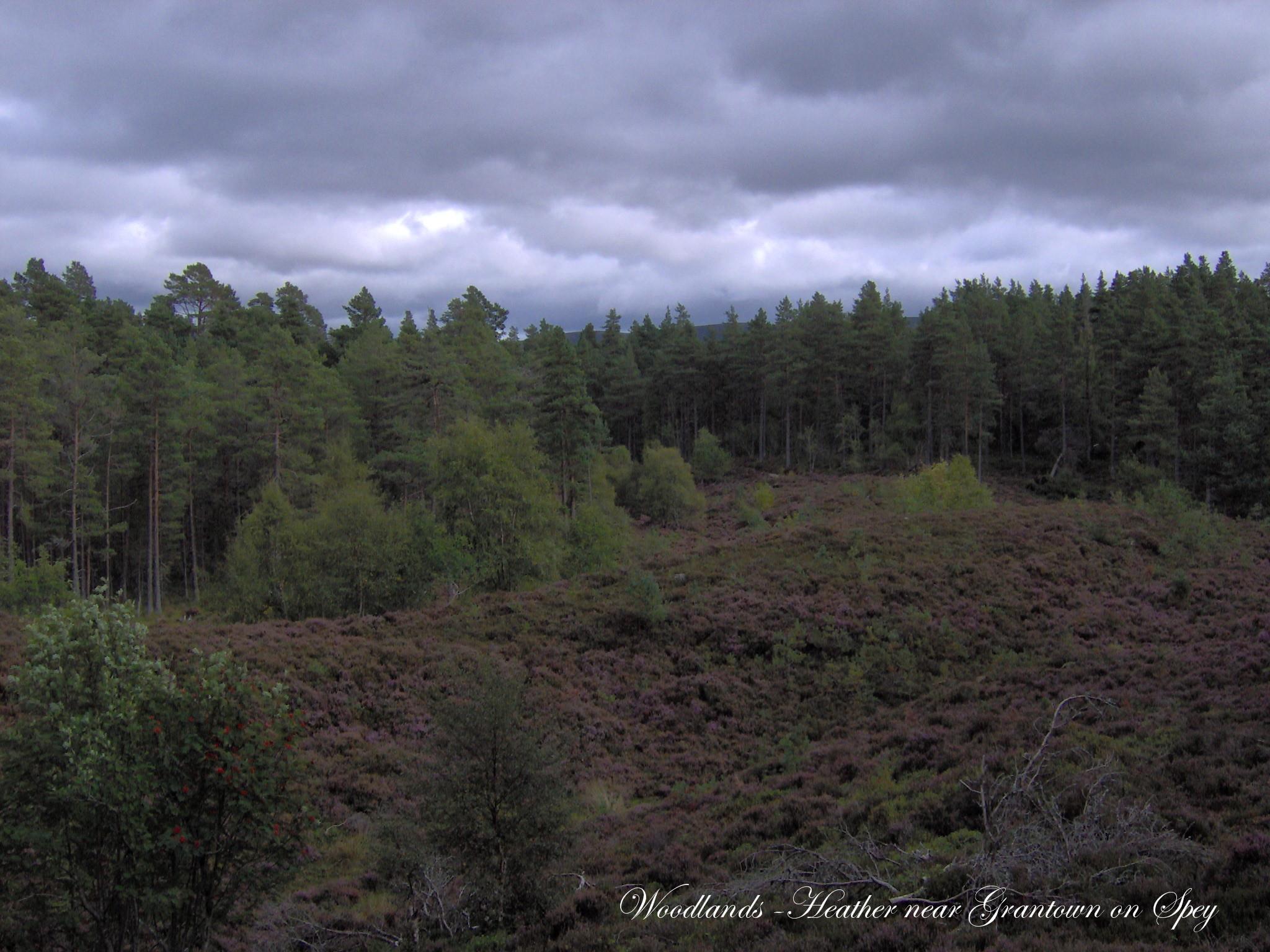 Heather Woodlands Walking Trail