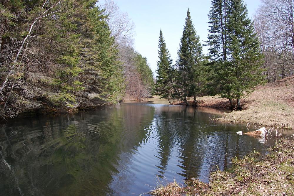 Pup in Pond, Vermont | MK