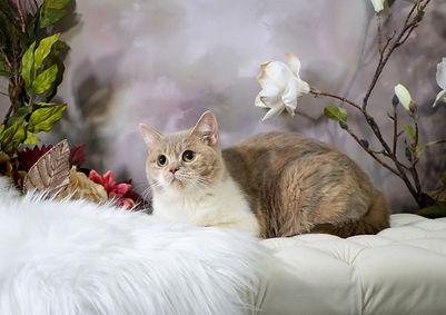 Zarina British Flowering 1.jpg