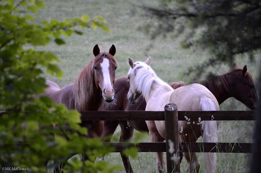 Montana Horse by MK McClintock