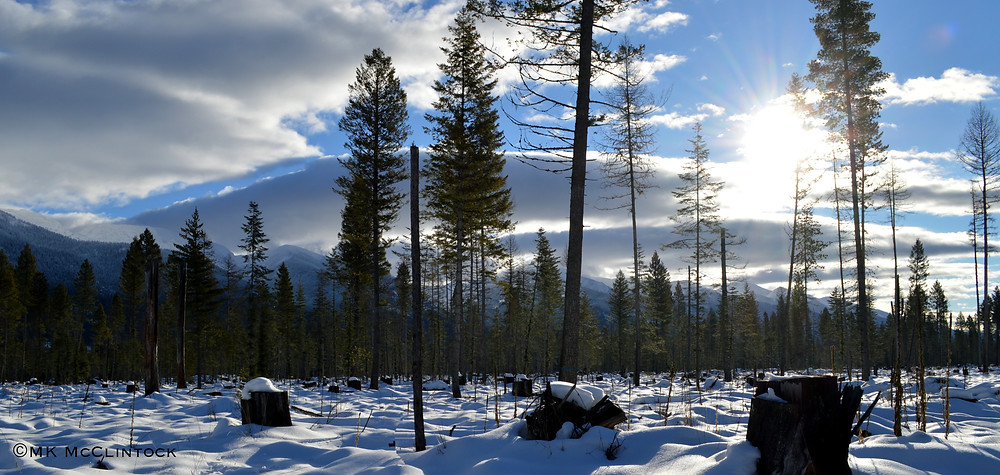 Jewel Basin Winter, Photo by MK McClintock