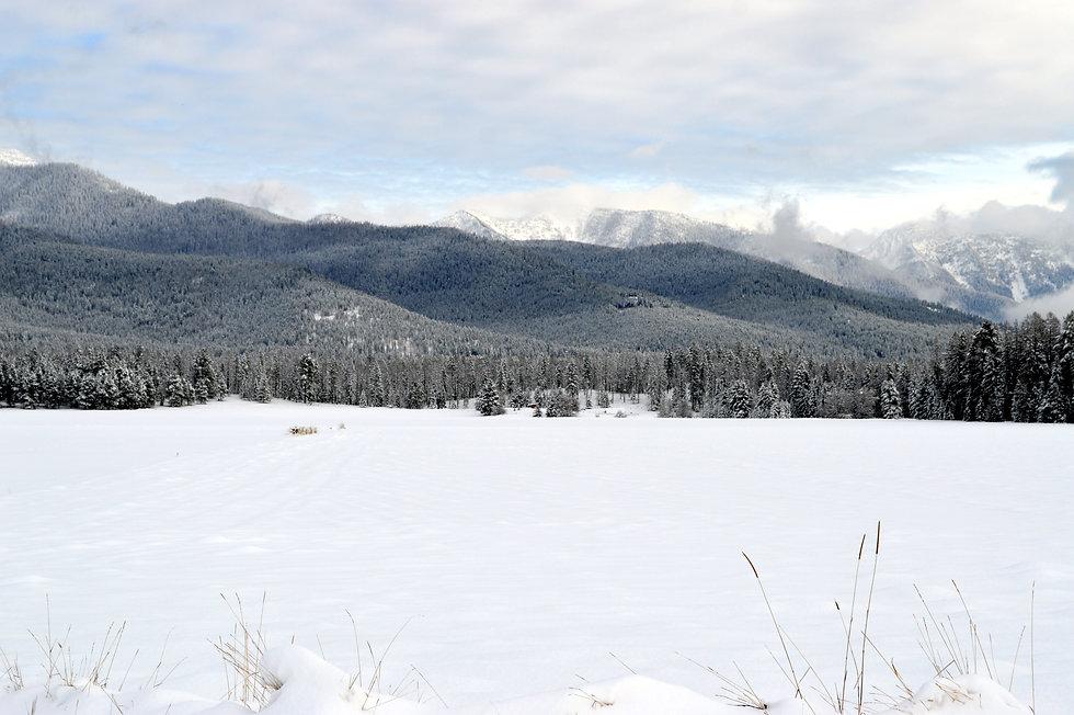 Winter 018.JPG