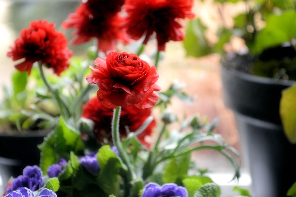 Flowers ©MK McClintock