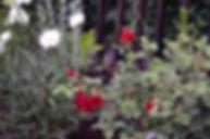 Gardens_PottertonHill_3.jpg