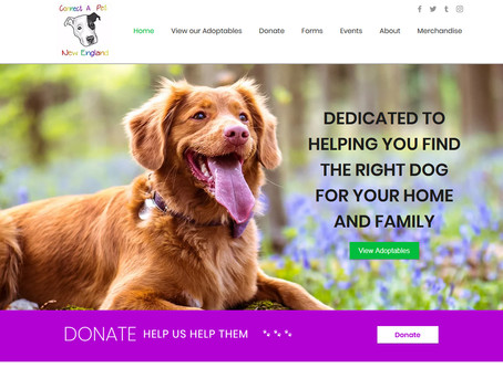 Website Design: Connect-A-Pet New England