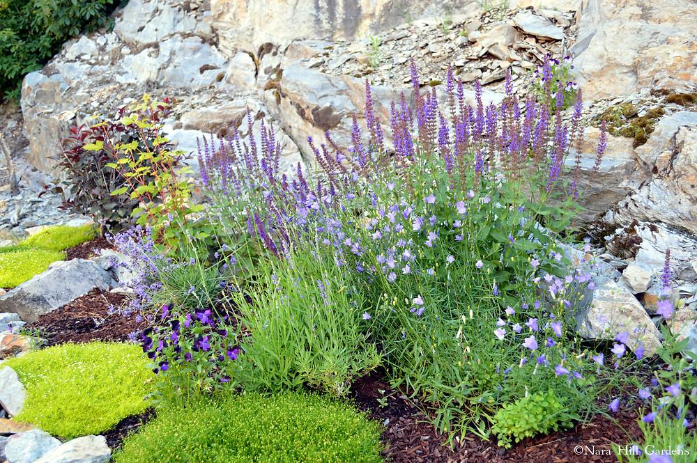 Lavender by MK McClintock