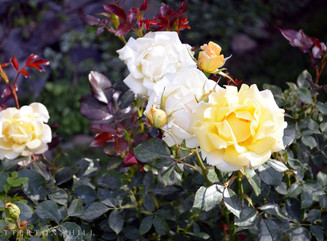 A Bounty of Blooms with Late May Flowers