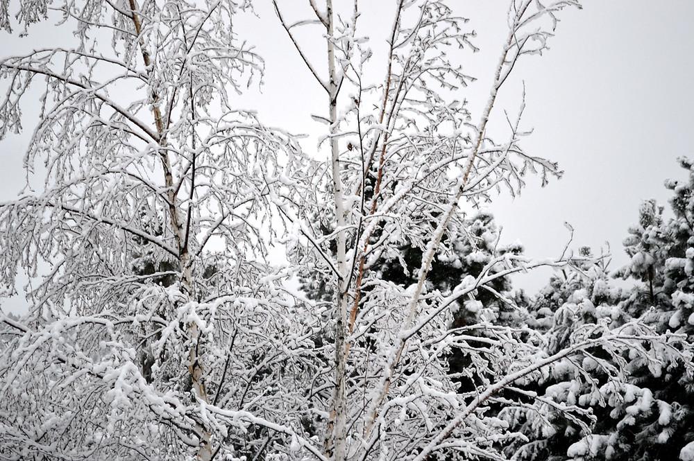 Winter ©MK McClintock
