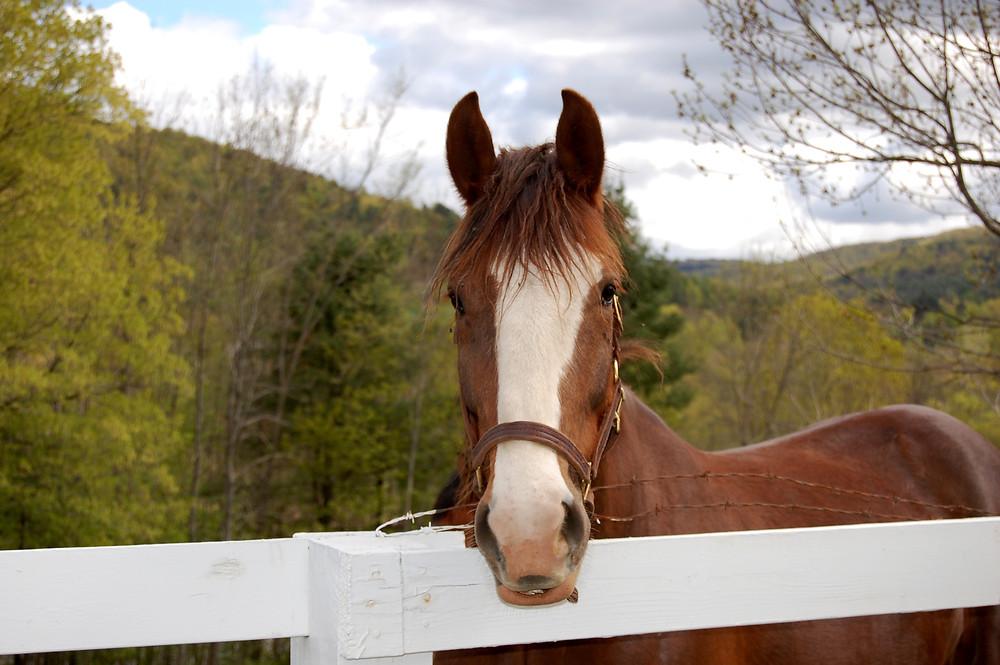 Vermont Horse by MK McClintock