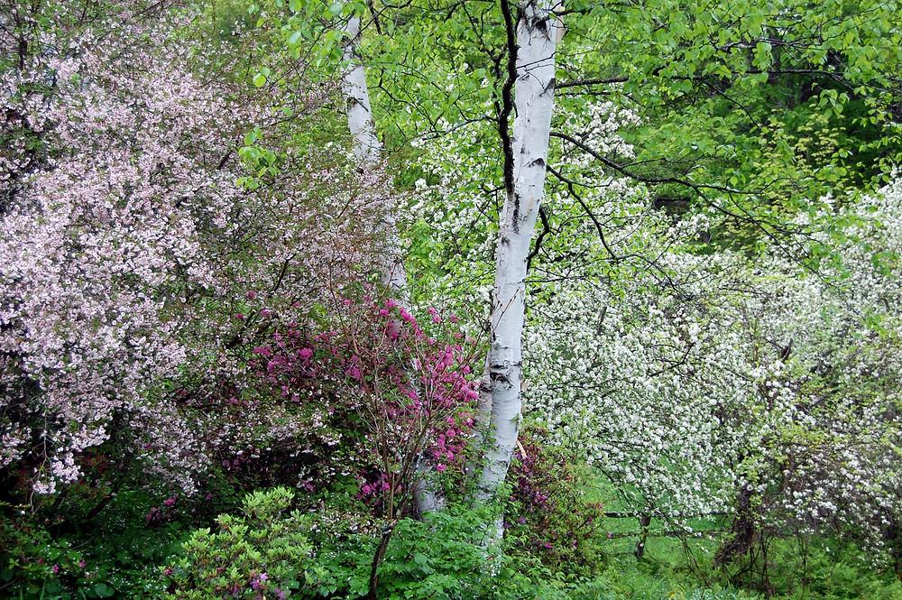 Vermont Spring_MK McClintock