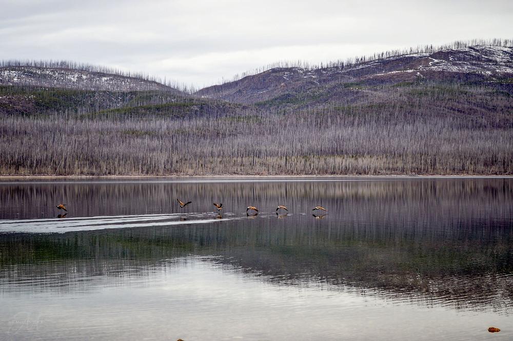 Reflections in Glacier National Park_©MK McClintock