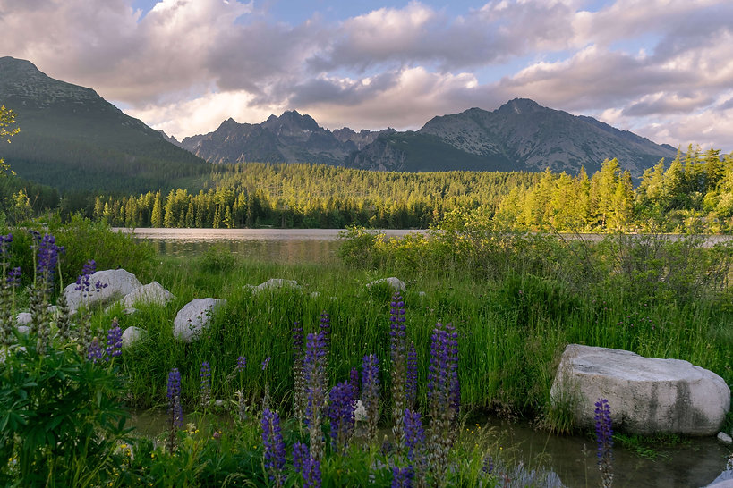 Depositphotos_130352548_xl-2015_mountains lupine_sm.jpg