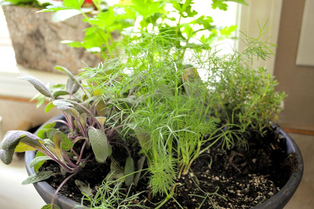 A Writer in the Garden: Dirt Day! (MK McClintock)