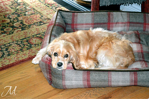 Puppy Companion_MK McClintock.jpg