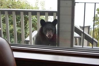 Stewart the Bear
