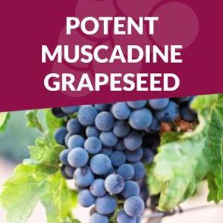 grapeseed OPC antioxidant.jpg