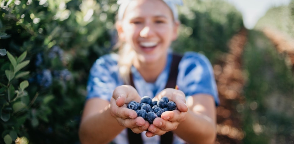 Blueberry pterostilbene and grape resveratrol have numerous health benefits. But what is the difference between them?