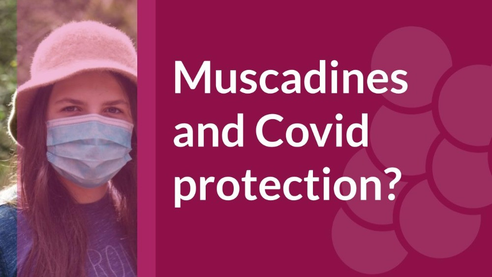 muscadine grape and covid-19 corona protection
