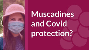 Can Muscadines and Green Tea Help Covid Corona Virus Protection? Research Links.