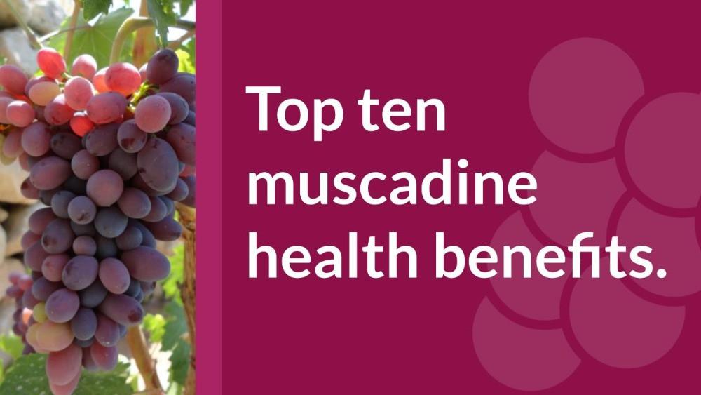 ten muscadine grape health benefits