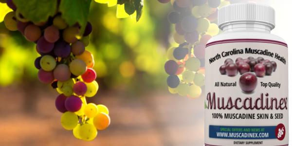 muscadine grape resveratrol
