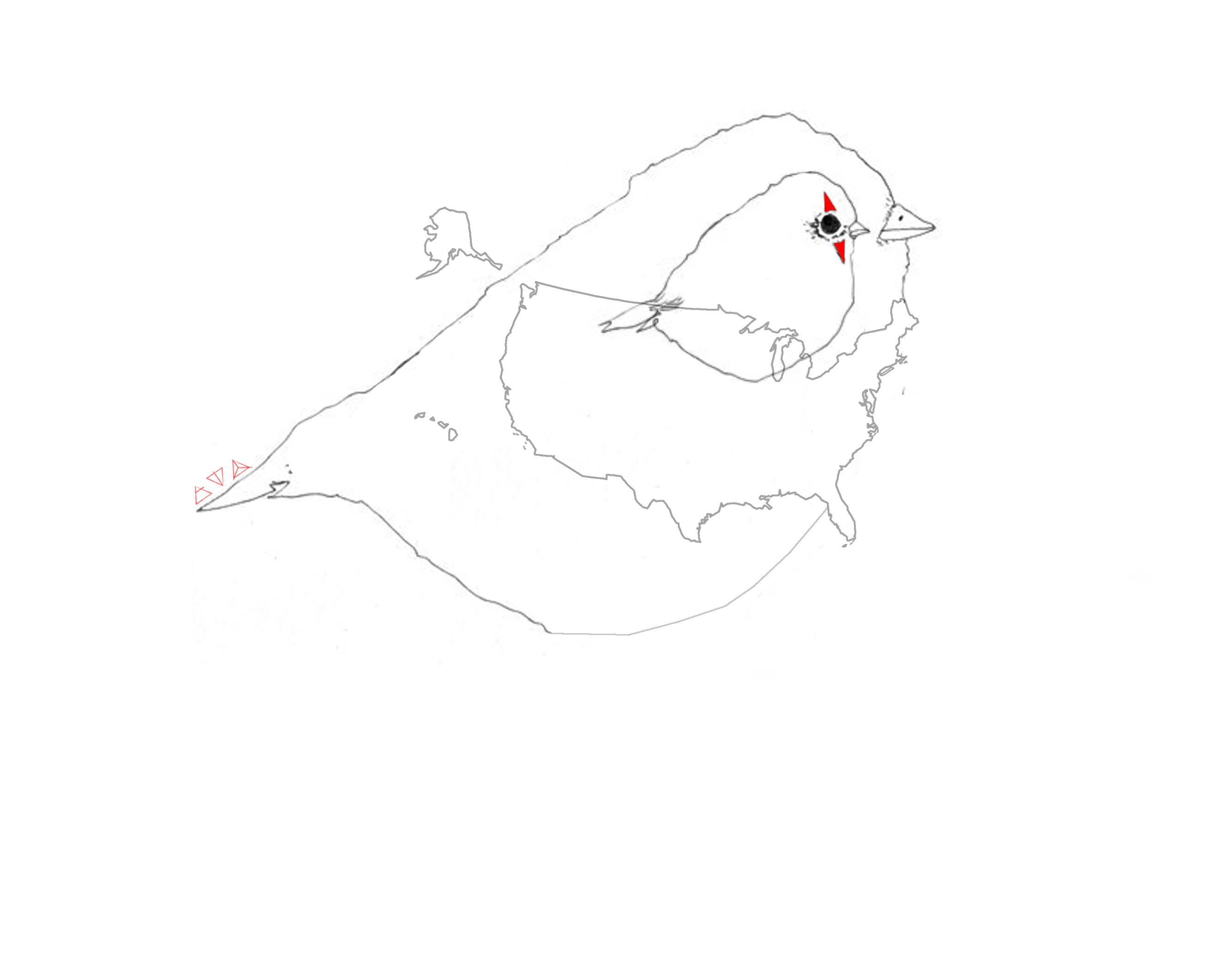 illustration-usabird