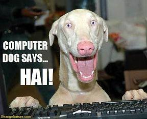 Cute photo of a dog using a keyboard.